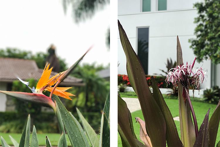 naples florida flowers